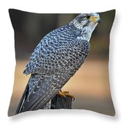 Peregrine Falcon Perched Throw Pillow