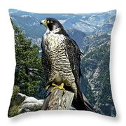 Peregrine Falcon, Yosemite Valley, Western Sierra Nevada Mountain, Echo Ridge Throw Pillow
