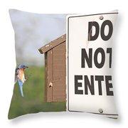 Perfect Nesting Box 2 Throw Pillow