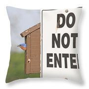 Perfect Nesting Box Throw Pillow