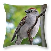 Perfect Profile - Chipping Sparrow Throw Pillow
