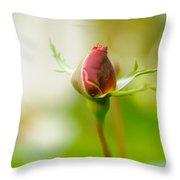 Perfect Red Rose Bud  Throw Pillow