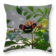 Perfect Set - Butterfly Throw Pillow
