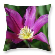 Perfect Single Dark Pink Tulip Flower Blossom Blooming Throw Pillow