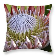 Perfection In Pink Throw Pillow