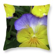 Perfectly Pansy 12 Throw Pillow