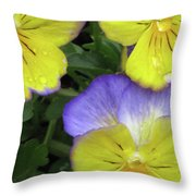 Perfectly Pansy 14 Throw Pillow