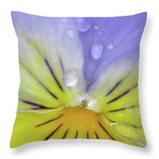Perfectly Pansy 17 Throw Pillow
