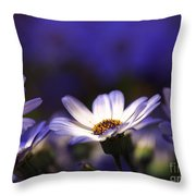 Pericallis On A Cool Spring Evening 4 Throw Pillow