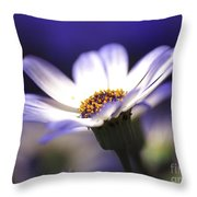 Pericallis On A Cool Spring Evening Throw Pillow