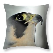 Perigrene Falcon Throw Pillow