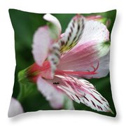 Perivian Lily With Ant Throw Pillow