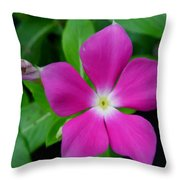Periwinkle Flower Throw Pillow