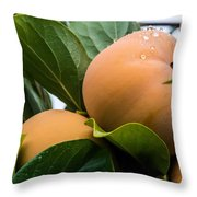 Persimmons Ready For Harvest Throw Pillow