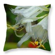 Peruvian Lilies 3 Throw Pillow