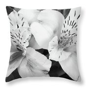 Peruvian Lilies  Flowers Black And White Print Throw Pillow