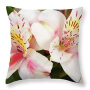 Peruvian Lilies  Flowers White And Pink Color Print Throw Pillow
