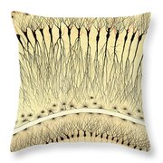 Pes Hipocampi Major Santiago Ramon Y Cajal Throw Pillow