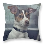 Pet Looking Out Car Window On Rainy Day Throw Pillow