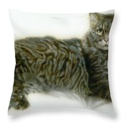 Pet Portrait - Buddy Throw Pillow