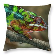 Ambilobe Panther Chameleon Throw Pillow