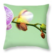 Phalaenopsis Throw Pillow