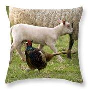Pheasant And Lamb Throw Pillow