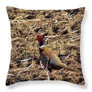Pheasant On The Move Throw Pillow