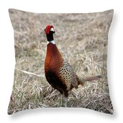 Pheasant Rooster Throw Pillow