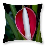 Philodendron Flower Throw Pillow