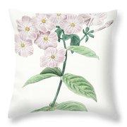 Phlox Acuminata Throw Pillow