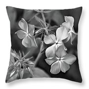 Phlox Divaricata Bw Throw Pillow