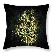 Photo Of Succulents Throw Pillow