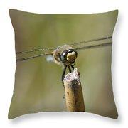 Photogenic Dragon Throw Pillow