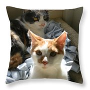 Photograph Me Not Her Throw Pillow