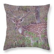 Photograph Throw Pillow