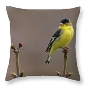 Lesser Goldfinch Throw Pillow