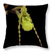 Phragmipedium Richteri Orchid Throw Pillow