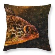 Pices In Aquarium Throw Pillow