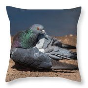 Pidgeon Preening Throw Pillow