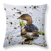 Pied Billed Grebe Throw Pillow