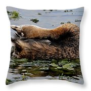 Pied-billed Grebe Spreading Oil Throw Pillow