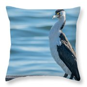Pied Cormorant On Old Wharf Throw Pillow
