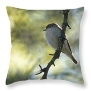 Pied Flycatcher 1 Throw Pillow
