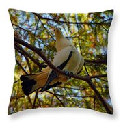 Pied Imperial Pigeon Throw Pillow