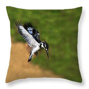 Pied Kingfisher Throw Pillow by Tony Beck