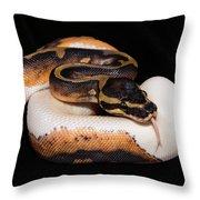 Piedbald Ball Python Throw Pillow