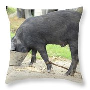 Pig Eating From A Bucket Throw Pillow