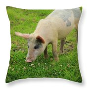 Pig In Wildflowers Throw Pillow