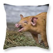 Piglet Eating Hay Throw Pillow